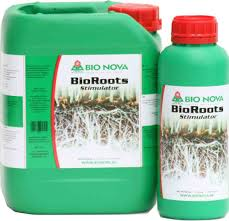 BioRoots