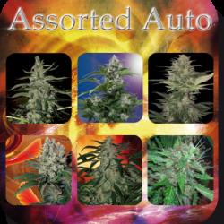 assorted-auto_2435_1_ (1)