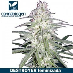 destroyer-cannabiogen-feminizada-sativa